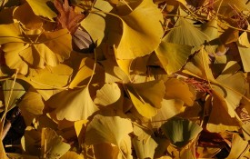 Ankündigung: Die Tübinger Herbstdebatten